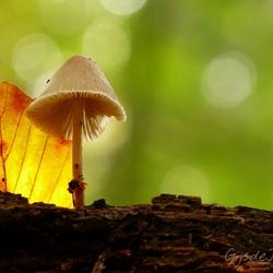 Light behind the leaf
