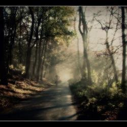 zomaar in het bos