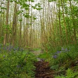 Prachtig bos op Texel.