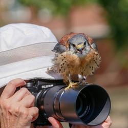 Een vogel van de Fiji eilanden ? Nee, een Amerikaanse torenvalk op een Fuji camera.