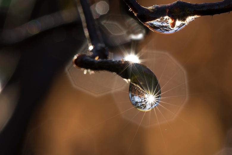 druppelsterretje - Vanmorgen even lekker in het zonnetje in de tuin met druppeltjes in de weer geweest.......... Ik vind het sterretje erg leuk, ben b
