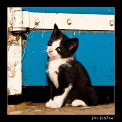 Boerderij kitten
