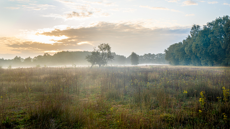 Groote heide in the morning -