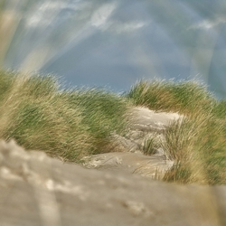 Helmgras op Zandmotor