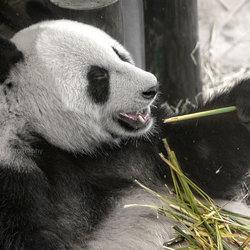 Heerlijk genieten van de bamboe