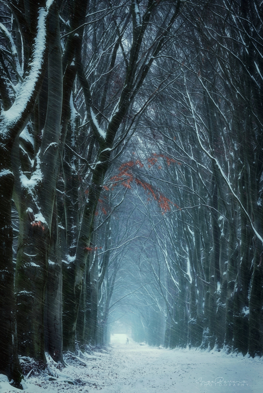 Caught in a Blizzard. - Ik krijg geen genoeg van dit heerlijke koude weer. Van mij mag er nog meer sneeuw vallen!