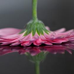 Bloem Met Reflectie
