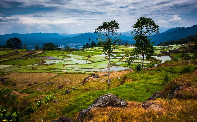 Fields of the future - De rijstvelden van midden Sulawesi
