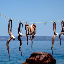 Octopussen drogen in Skala Sykamineas