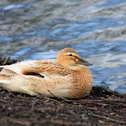 Relaxen aan de waterkant