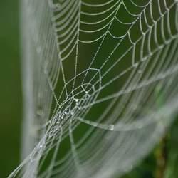 Spinneweb in ochtend dauw