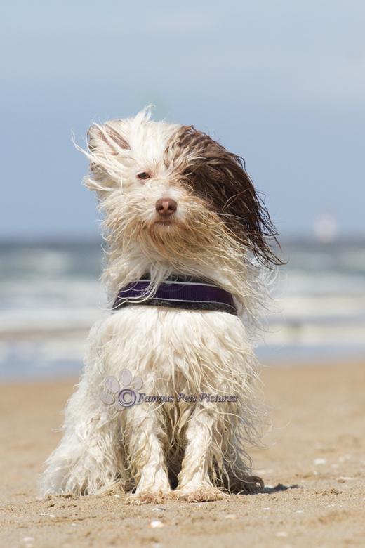 Toby 'beach look' - Mijn broer vierde in mei voor het eerst sinds járen zijn verjaardag. Geen kringetje met mensen en een salontafel met blokjes kaas