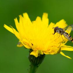 Kleine vlieger