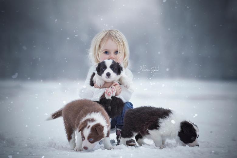 winter puppylove