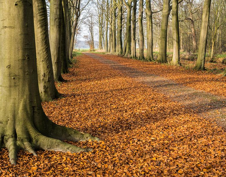 Herfstbos - Een typisch herfstbos. In dit geval de Horsten bij Voorschoten. Anders dan je zou denken, is dit midden op de dag rond half 2. De zon staa