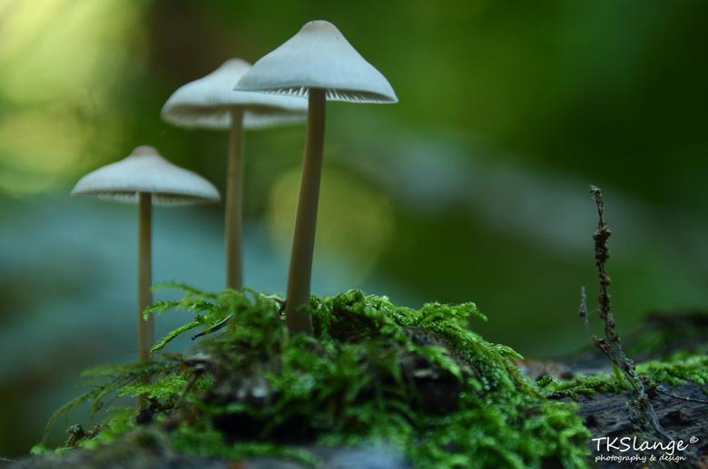 Vietnameesjes in het bos