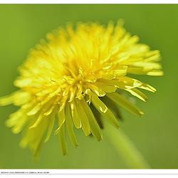 Voorjaar....  in kleine dingen... 1