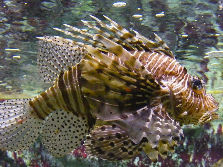 Vis..... - Uit een bezoekje aan Artis heb ik deze fotosessie van twee foto's met deze vis overgehouden