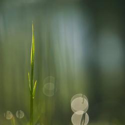 De schoonheid van gras