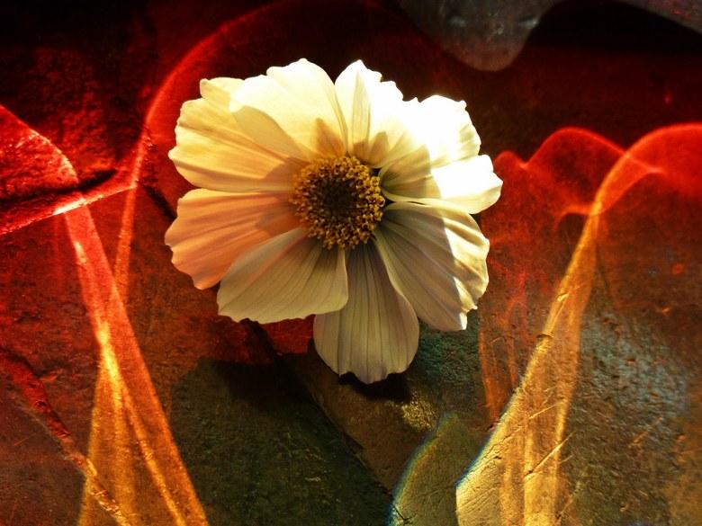 Flower and colors.... - Spelen met licht en kleur.....