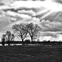 Bomen aan rivier De Waal