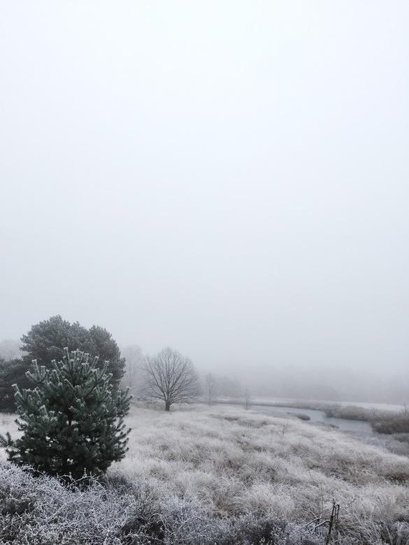 Winters Stilleven - Een eerste mistige kou bedekt en brengt het landschap in een stille, rustige conditie. Het nog net niet bevroren beekje, kabbelt e