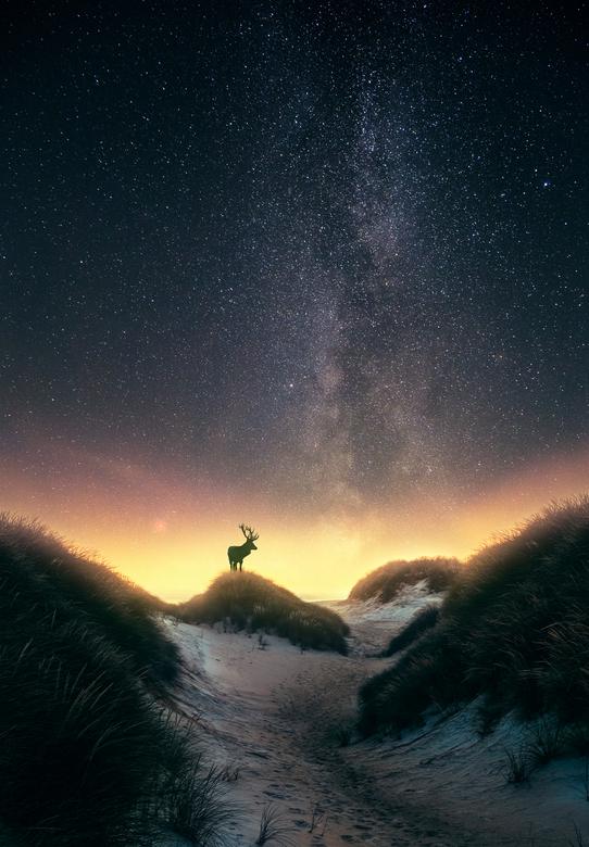 Damhert onder de sterren (Melkweg) - Iedereen een fijn uiteinde en een Gelukkig en Gezond 2019 !