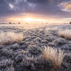 Ijskoude winterse zonsopkomst op de heide