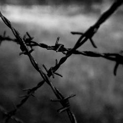 Westerbork 1
