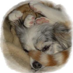 Geboren vijanden: Mijn Chihuahua Lisa en katertje Bram.