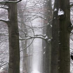 White winter lane