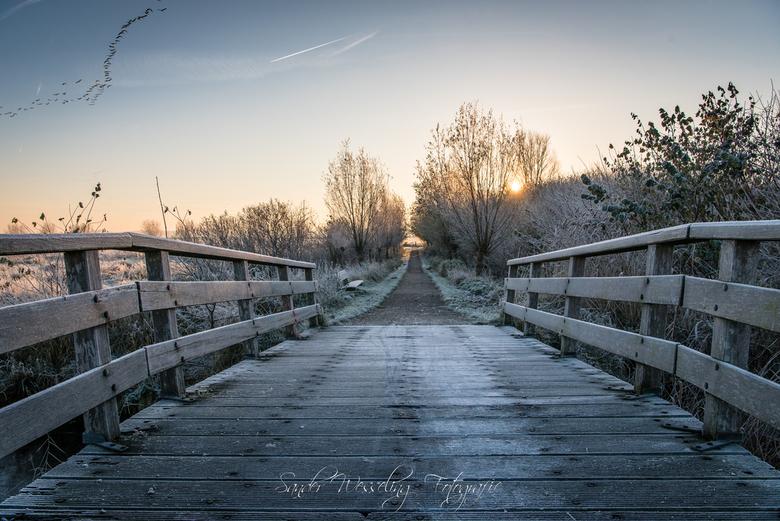 Winter morning - Vanochtend gemaakt, het was een koude winter ochtend in november.