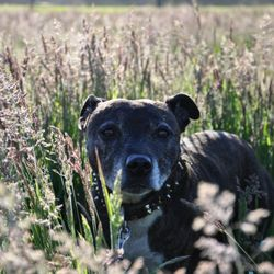 tyra in het gras