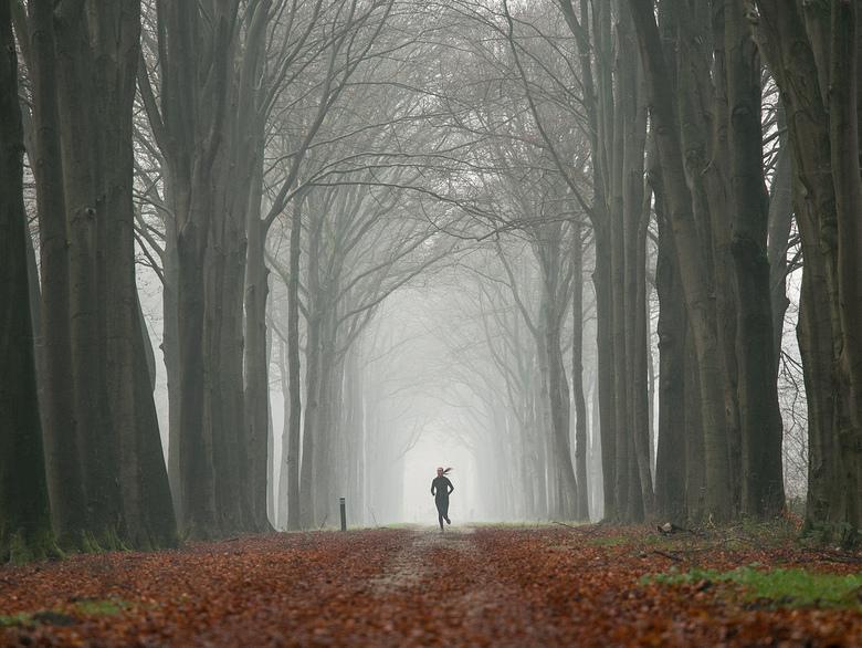 Mist in het bos - Zondag was het erg mistig. Precies op de goede plek kwam een hardloopster aan.<br /> <br /> Iedereen bedankt voor het bekijken en