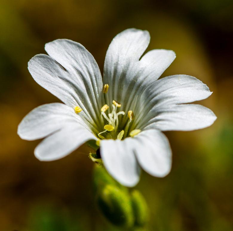 Wit bloempje -