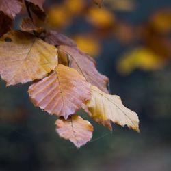 Herfst (3)