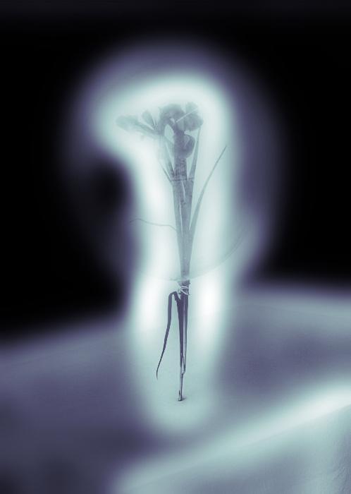 iris ... - …gevangen