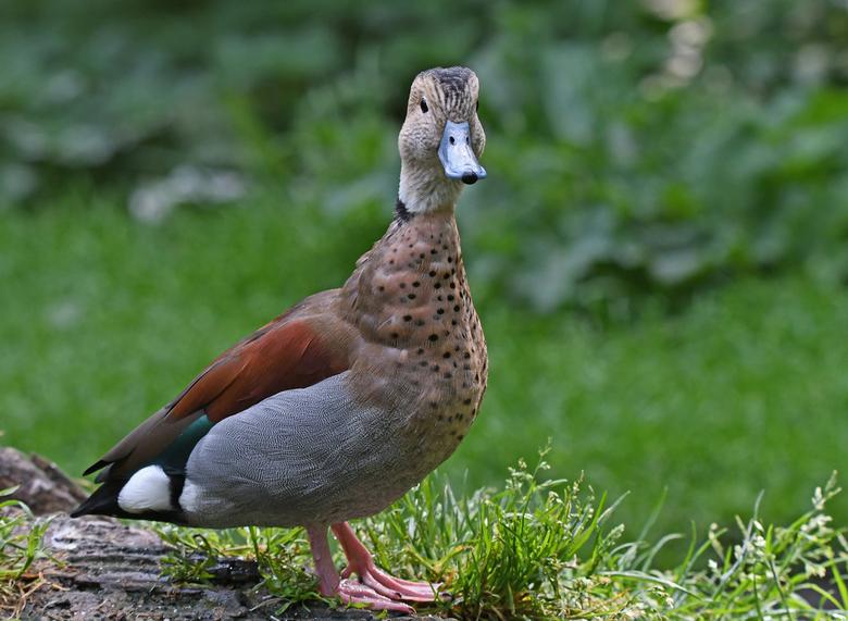 lekker rustig - Ik heb deze foto in Naturzoo Rheine Duitsland (NRW) gemaakt. Een kleine dierentuin met goede fotomogelijkheden. De tuin beschikt over