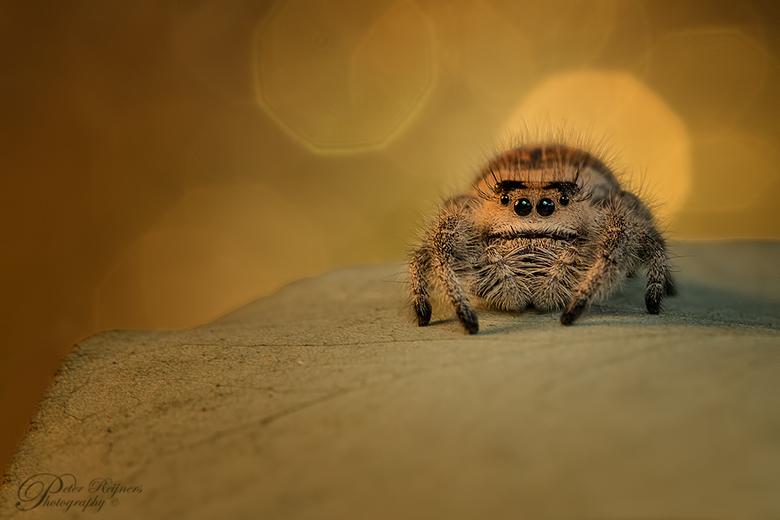 Look at Me - Laatst een mooi spinnetje voor mijn lens gehad.<br /> Dit modelletje was schijnbaar onder de indruk van wat ik allemaal het doen was, wa