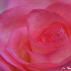 Feeling pink....