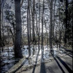 bevroren zonnetje