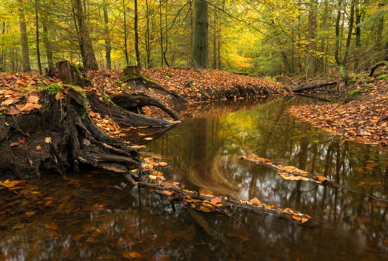 Hersft - Herfst in de Nederlandse bossen, in dit geval de Leuvenumse Beek. <br /> Wegens Corona de trip naar de Hoge Venen in Belgie afgezegd en in N