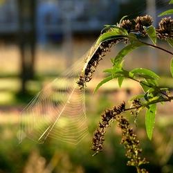Spinnenweb in de ochtendzon.