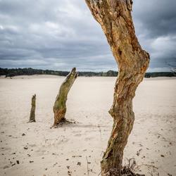 Dode boom | Soesterduinen