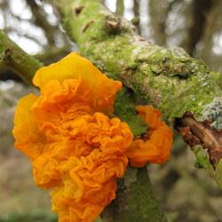 mooi orange