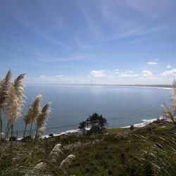 Nieuw - Zeeland 392