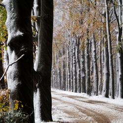 Op de grens van herfst en winter.....