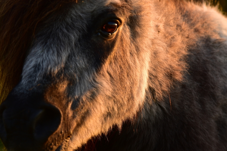 My little pony - Close up pony met de Tamron 70-300mm. 'S avond rond half 9. Mooi zacht licht.