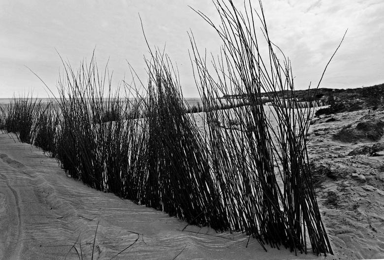Texels strandzicht - Texels strandzicht