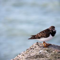 A bird on a rock!